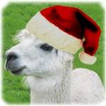 Bob's Your Uncle 'Santa