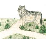 Crossroad Wolf