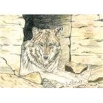 Healing Wolf