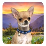 Chihuahua Meadow