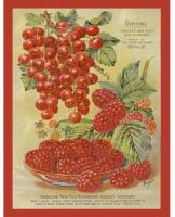 Currant & Raspberry Design
