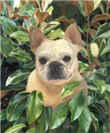 French bulldog products