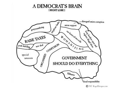 A Democrat's Brain