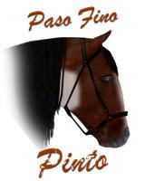 Pinto Paso Fino