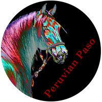 Metalic Peruvian Paso