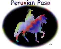 Peruvian Paso Rainbow