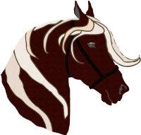 Rocky Mountain Horse Head