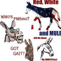 Gaited Mules