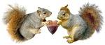 Squirrels Acorn Heart