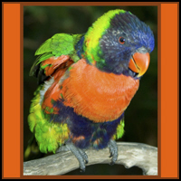 PARROT T-SHIRTS & GIFTS