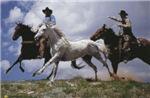 Cowboys Roping Mustang