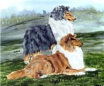 Rough Collie Pair w Blue