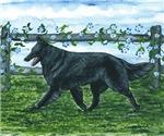 Belgian Sheepdog Patrol