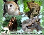 Wildlife Waystation Collage 1