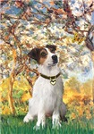 SPRING<br>& Jack Russell Terrier