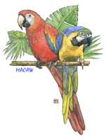 Tropical Macaws Parrot Design