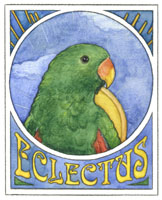 For Eclectus Lovers