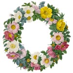 Wreath of Rosa by Redouté