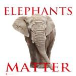 Elephants Matter