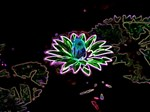 Neon Glow Lily