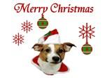 JRT Holiday: Christmas Greetings