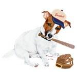 Jack Russell Baseball Fever