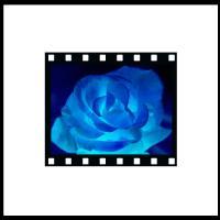 Rose Negative