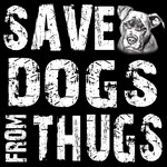 Save Dogs from Thugs