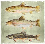 It's All About the Trout