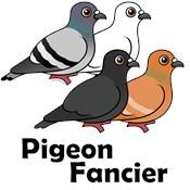 Domestic Pigeon Designs