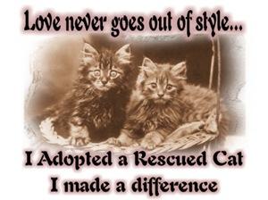 I Adopted A Rescued Cat