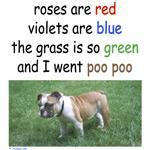 Poo Poo!