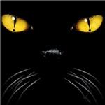 Cat-Attude