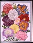 Seed Catalogue Art