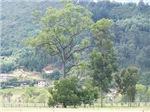 Trees in Tabio