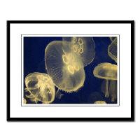 <b>jellyfish  framed nature photography</b>
