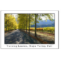 Wine Country Posters - Gifts