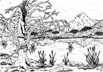 Pen Landscape