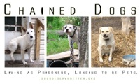 3 Chained Dogs: Longing to be Pets