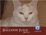 The Pets of Balloon Juice 2014 Calendar