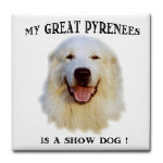 My Great Pyr is a Show Dog