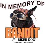 In Memory of Bandit the Biker Dog