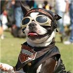 Chopper the Biker Dog