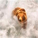 Bear in Mist