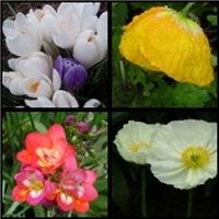 Spring Garden Collection