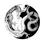 Yin Yang Dragon on Dark