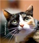 Cherie the Cat