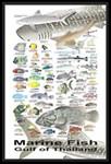 Fish Posters & Prints