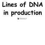 Lines of DNA