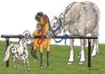 ~ HORSES, DONKEYS & MULES ~